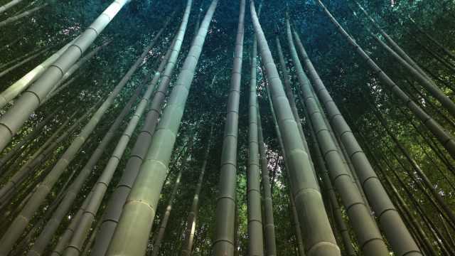 https://www.nihaoportugal.pt/wp-content/uploads/2019/07/Floresta-bamboo-1-640x360.jpg